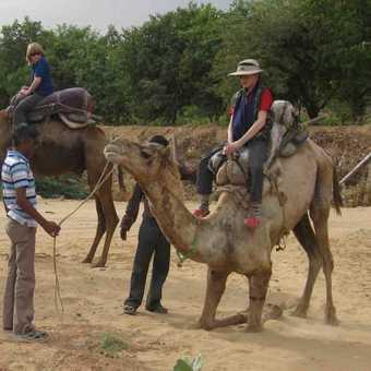 Camel Ride Pushkar