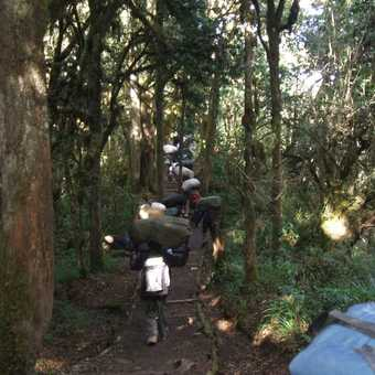 last day through jungle to maweka gate
