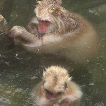 Taking a dip...