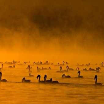 Flamingos at Dawn