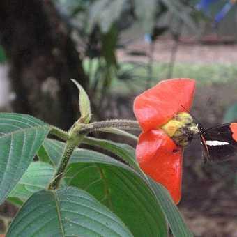 Butterfly garder, Laguna Lodge