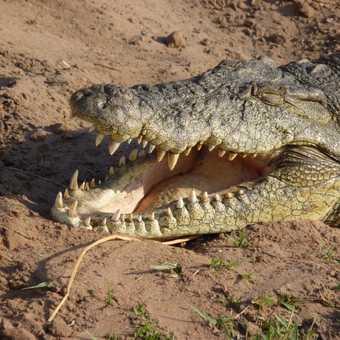 Croc basking in the sun