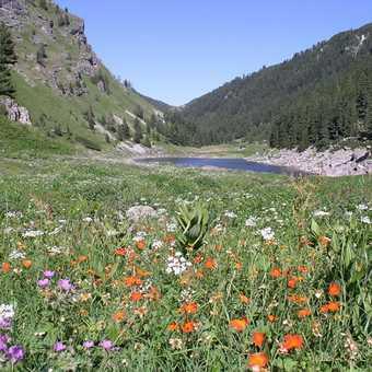 Rila Alpine Meadows