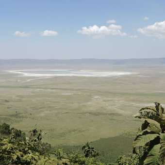 Ngorongoro crater - a natural 22km wide 'zoo' with 600m high walls meaning a high density of animals