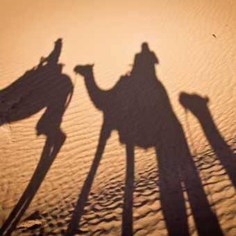 Camel ride_M'hamid_05