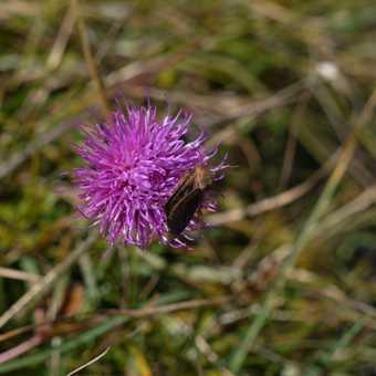 Alpine flora and fauna