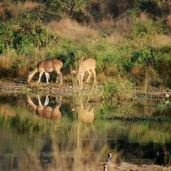 more wildlife at Ranthamore