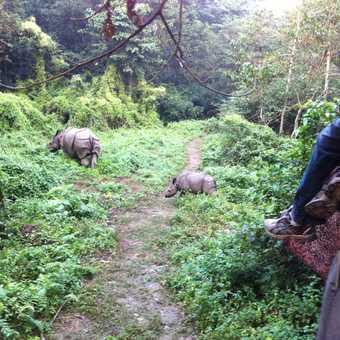 Rhinos in Chitwan!
