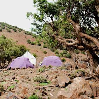 Wildlife camping