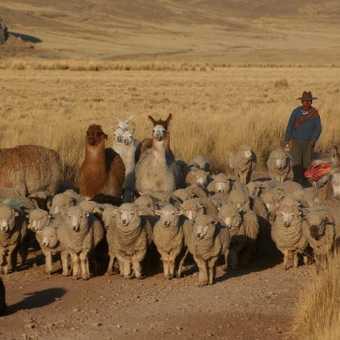 Peruvian Farmer