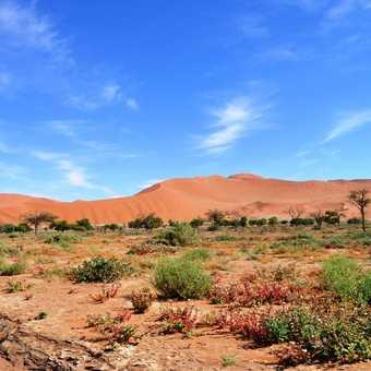 Blooming desert??