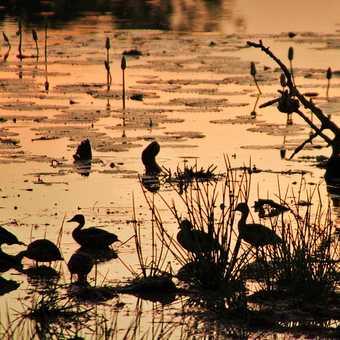 Sunset in Yala National Park