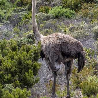 Protea - Kirstenbosch botanical garden