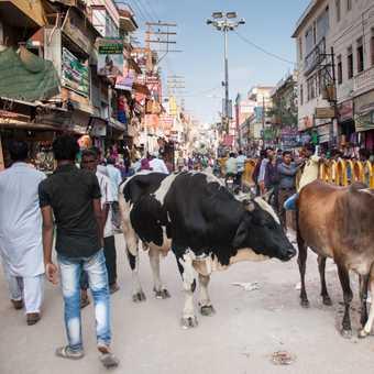 Making wishes, Varanasi