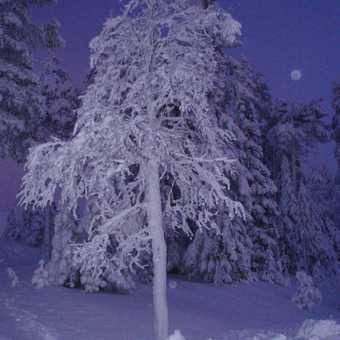 Tree at night in Ruka