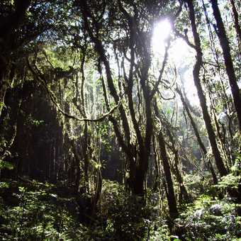 View of the Santa Elena Cloud Forest at the start of our walk through it.  Near Monteverde