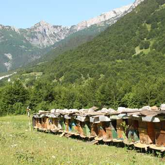 Valbona - beehives and a view, both from the hotel