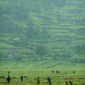 A curious observer - Rwanda