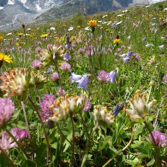 Alpine Meadows and Peaks
