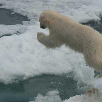 Bear with Air