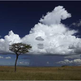 Lone tree and rain shower