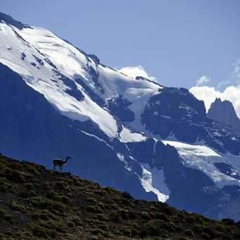 Guanaco lookout in the Torres del Paine...