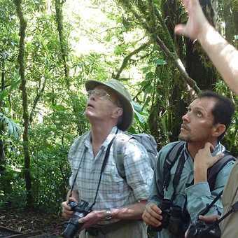 Canopy bridges walk - Monteverde NP