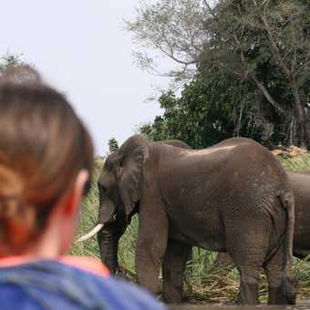 Canoeing up to elephants