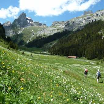 Stunning meadows in the Saustal