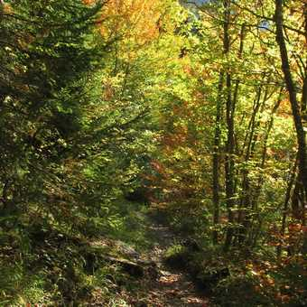 Autumn on Trail to Yagodina Cave