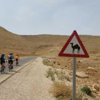 Beware of Camels!