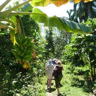 Walking through plantations in Baracoa