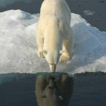 Bear 15 jump