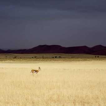 Springbok - Storm approaches