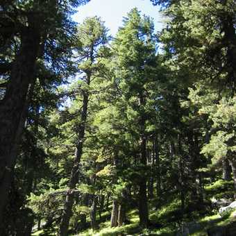 Pirin Ancient Forests_2