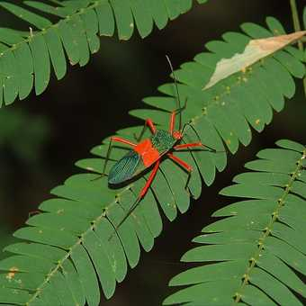 Amazon Insect