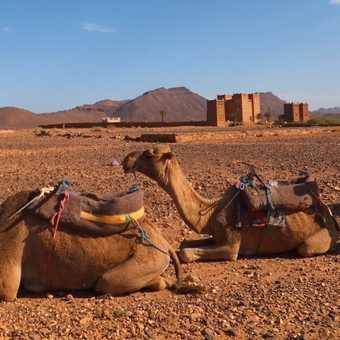 Saharan Taxi Rank