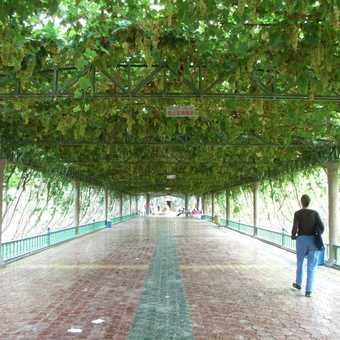 Vine covered walkways in Turfan
