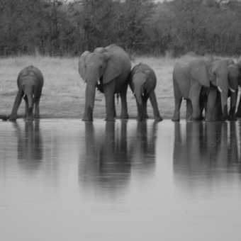 elephants at Zwei Zwei pan