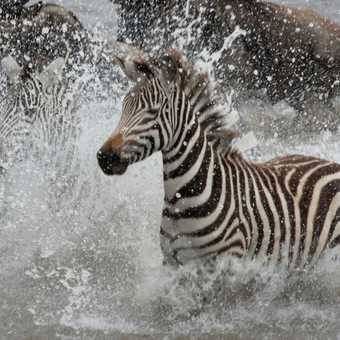 Crossing the Mara in a hurray