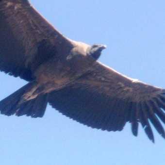 That Condor moment