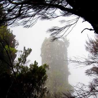 Outcrop in Mist Pico Ruivo Walk