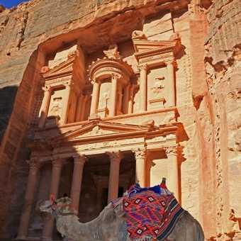 Camels at the Treasury, Petra