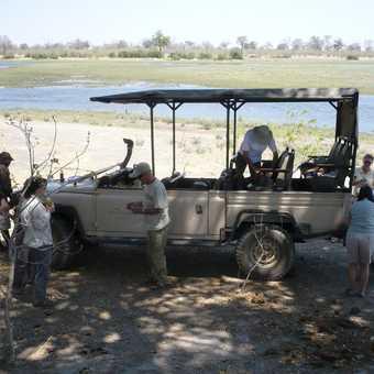 Blue wildebeest - Linyanti