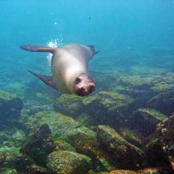 Playful sea lion