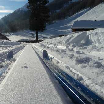 Skiis in Loipe Line