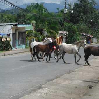 An equestrian adventure