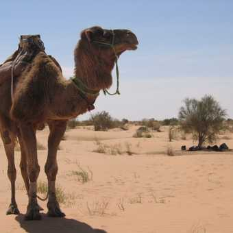 One of our 7 camels