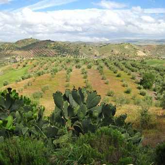 View from Cortijo Rosario