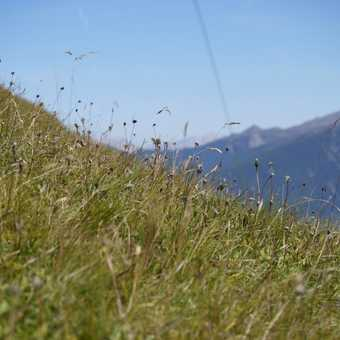 Alpine flora - summers end